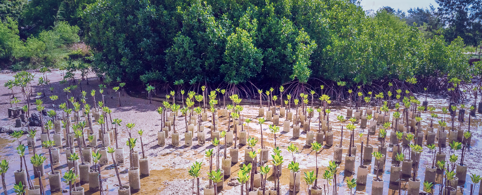 Planting mangroves replacement.